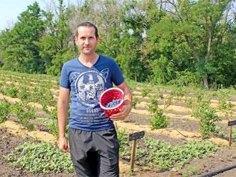 выращивание голубики