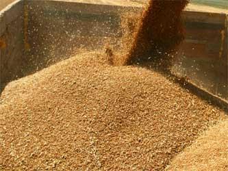 урожай зерновых культур