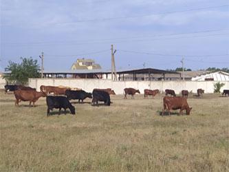 развитие животноводства в Крыму